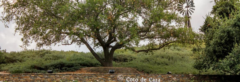 Coto De Caza, Dove Canyon, Tijeras Creek, Las Flores , Ladera Ranch and More